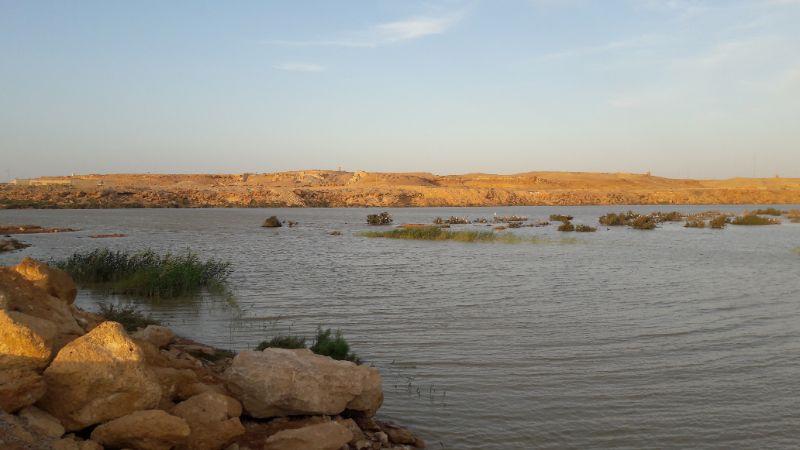 Życie w Saharze Zachodniej